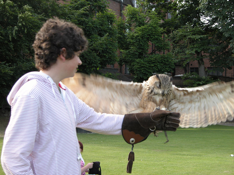 3 Falconry in Stratford